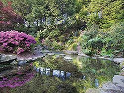 Crystal Springs Rhododendron Garden (Bring the dog in the off-season)