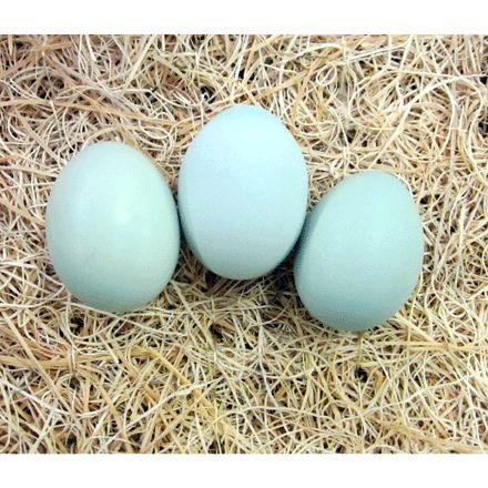 Blue Ameraucana Chickens for Sale- Buy Blue Ameraucana Chicks