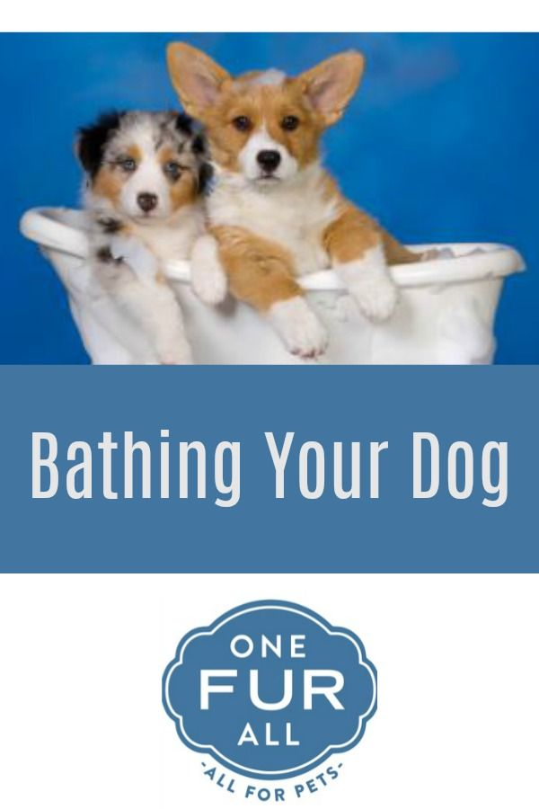 How Often Should I Bathe My Dog Dogs Pets Coconut Oil For Dogs