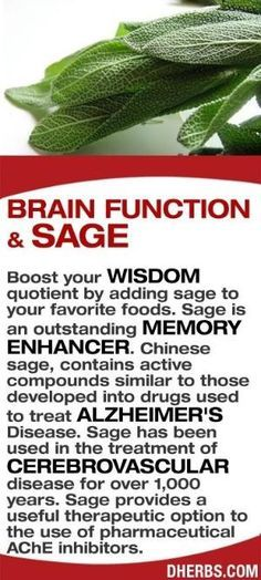 Boost your wisdom quotient by adding sage to your favorite foods. Sage is an outstanding memory enhancer. Chinese sage, contains active compounds similar to those developed into drugs used to treat Alzheimer's Disease. Sage has been used in the treatment of cerebrovascular disease for over 1,000 years. Sage provides a useful therapeutic option to the use of pharmaceutical AChE inhibitors.... by kaye