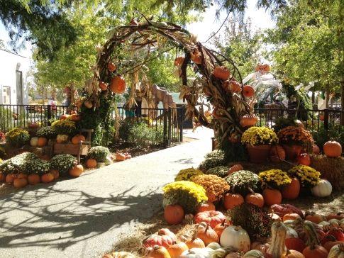 130 best oklahoma festivals events images on pinterest - Botanic gardens pumpkin festival ...