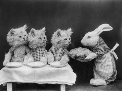 kitty. bunny. pie.Rabbit, Easter Dinner, Animal Photography, Vintage Pictures, Lol Cats, Vintage Cat, Children Book, Silly Cat, Cat Photos