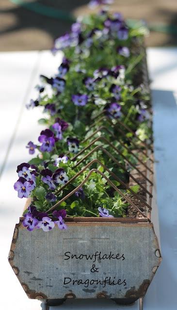 Chick feeder planter: Chickenfeeder, Garden Container, Idea, Violet, Gardens, Feeder Planter, Planters, Flower, Chicken Feeders