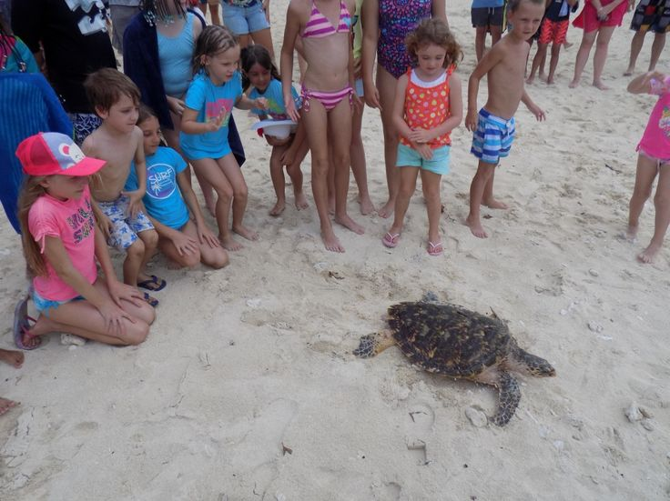 Turtle Release program...this pic shows the release of one of the turtles.