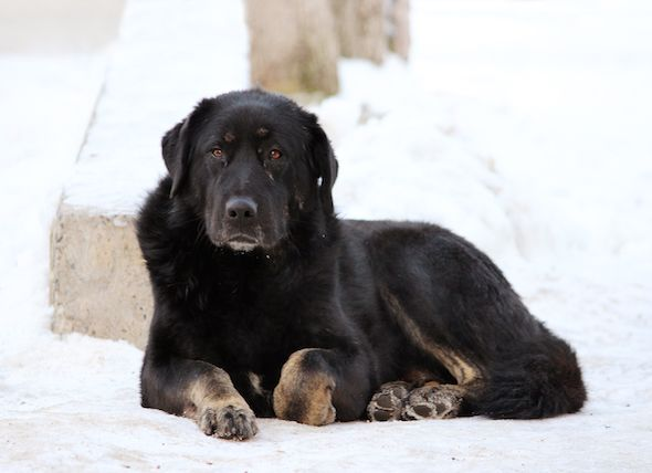 Frostbite in Dogs | petMD