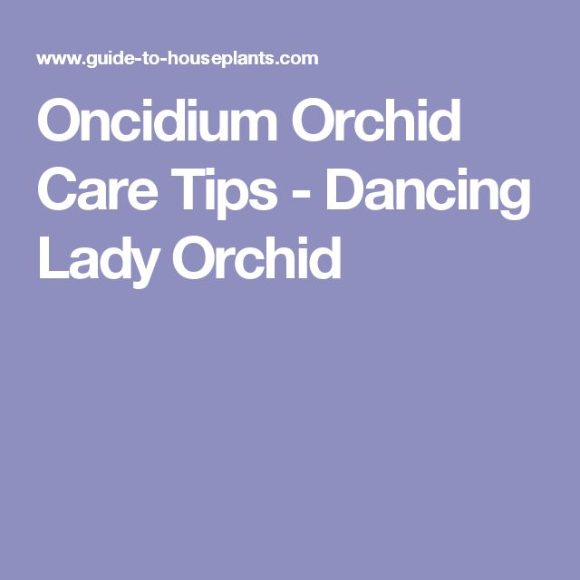 Oncidium Orchid Care Tips - Dancing Lady Orchid
