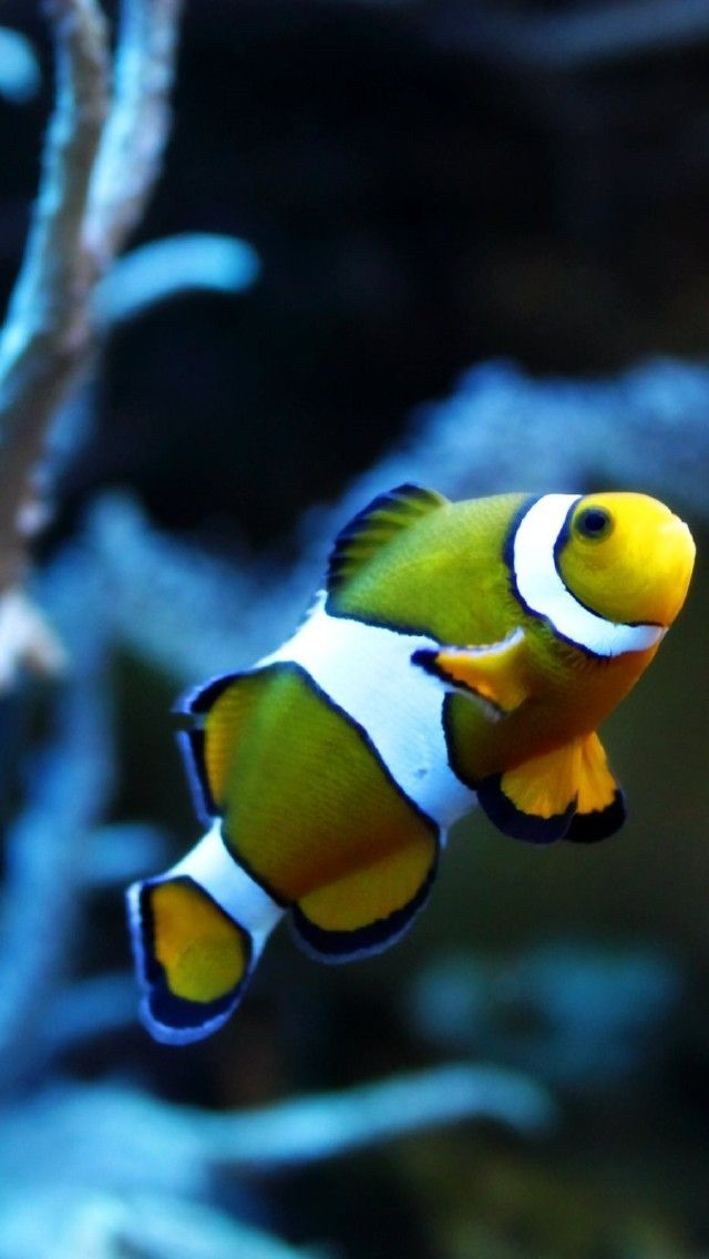 fish. Exotic, Underwater, Fish, Goldfish, Macro
