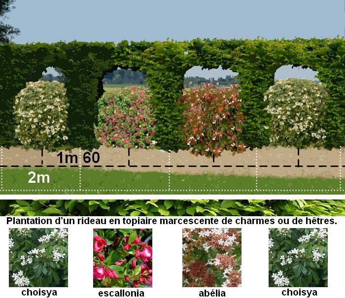 Quelque soit la saison la haie décorative fleurie délimitera le jardin en apportant fleurs parfum et servira de refuge aux insectes et sera le lieu idéal
