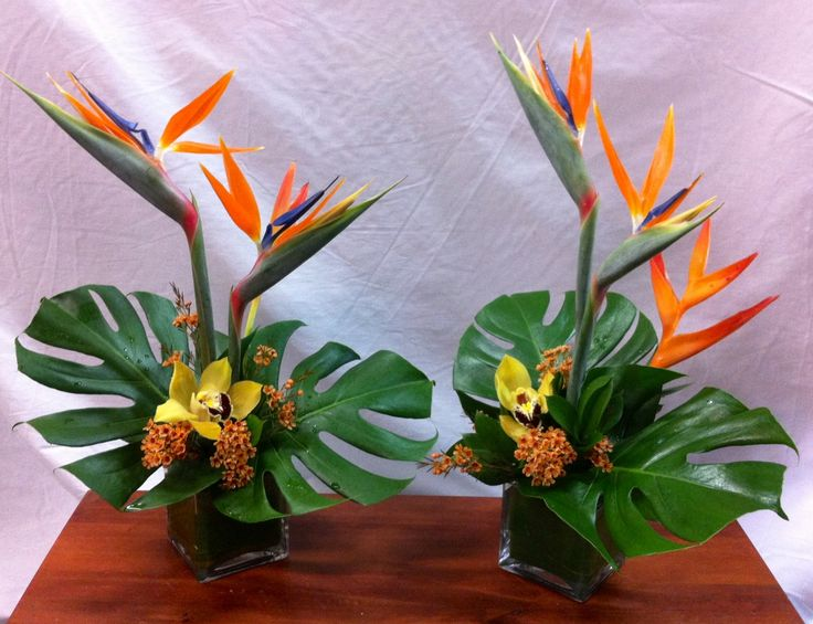 Birds Of Paradise Tropicals Tropical Floral