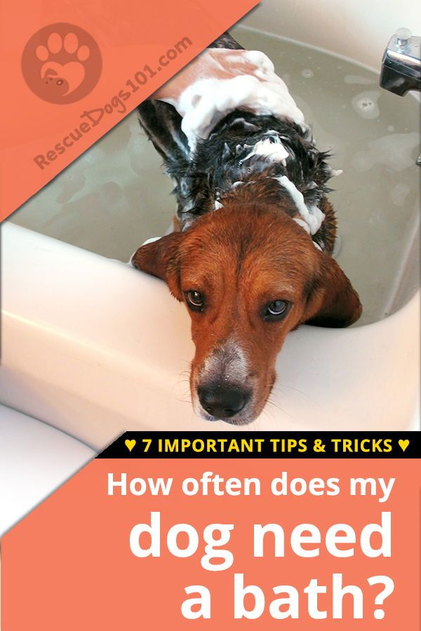 7 Important Dog Bathing Tips Dogs Dog Care Tips Shih Tzu
