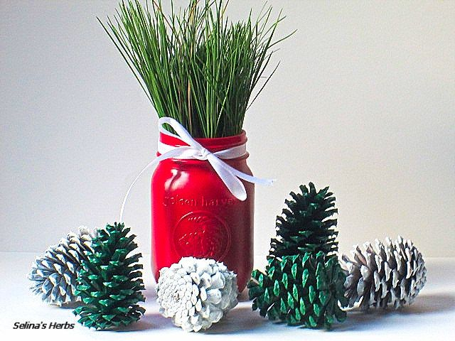 Red painted mason jar green pine needles, green white pinecone display arrangement centerpiece, pint mason jar, white pincone, table display by SelinasHerbs on Etsy