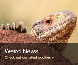 A New Species of Wild Cat Found Prowling Brazilian Forests and Grasslands – News Watch