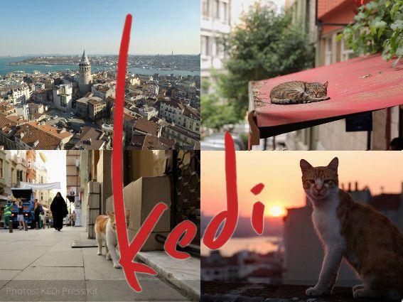 Los cientos de miles de gatos callejeros de Estambul son parte esencial de su cultura e identidad, compartidas por milenios con sus habitantes humanos…
