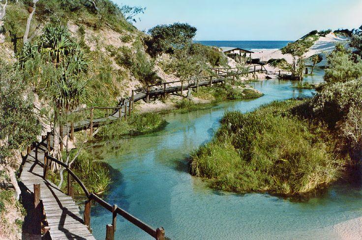 One of the few sand bottom creeks in the world. Eli Creek, Fraser Island, Australia