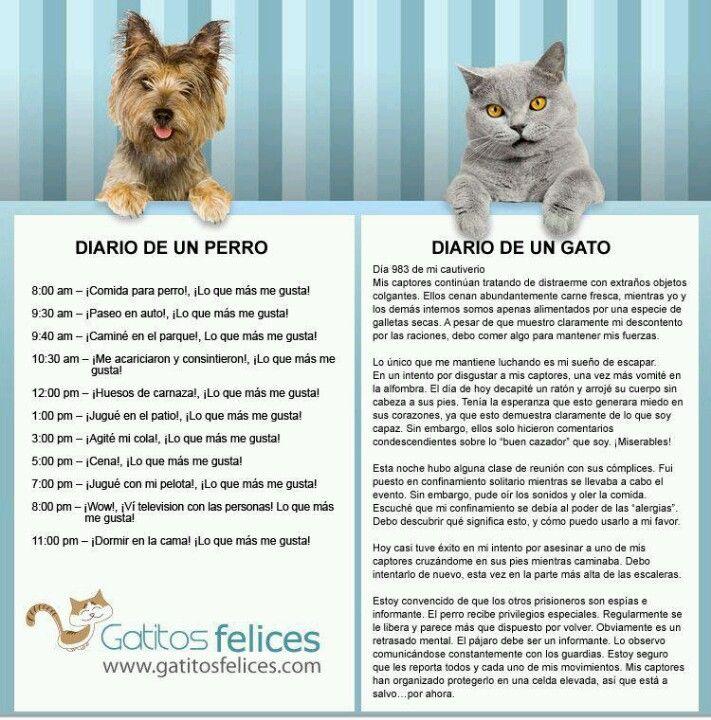 http://media-cache-ec0.pinimg.com/originals/e5/94/e0/e594e09049bd967e02d72eac97ccda94.jpg Diary of a dog/cat
