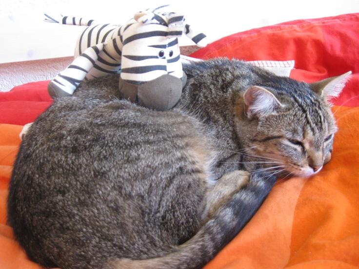 Meine Katzenfreundin :-)