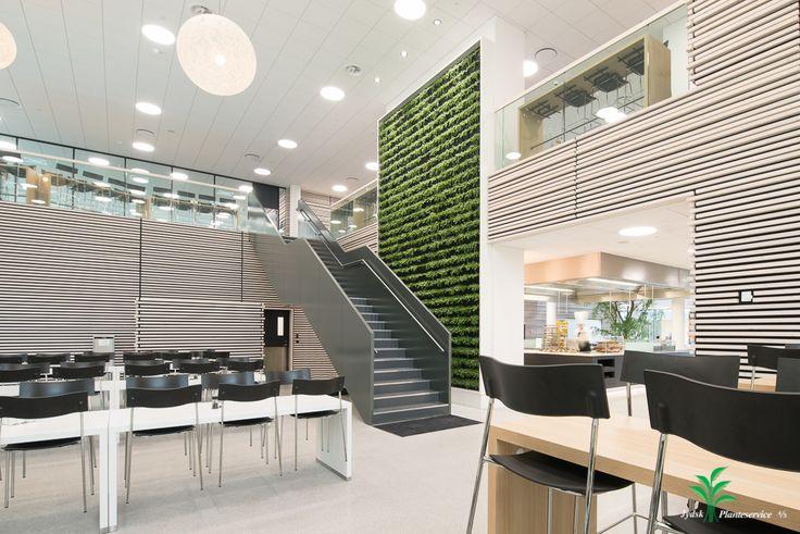 Nyt spændende projekt… I forbindelse med opførelsen af en ny kantine, har vi i leveret denne plantevæg.  Ønsket fra kunden var, at den skulle stå helt enkelt og kun med en type planter.  Placeringen er nøje valgt i samråd med kunden, så man uanset om man indtager sin frokost på 1. sal eller i stueplan, kan nyde denne flotte væg.   #plantevæg #naturalgreenwalls #indretning #akustik #kantine