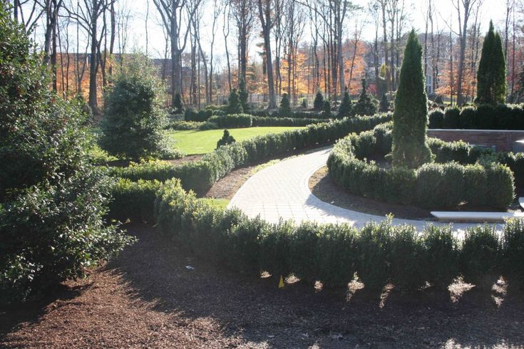 Best 25 American boxwood ideas on Pinterest