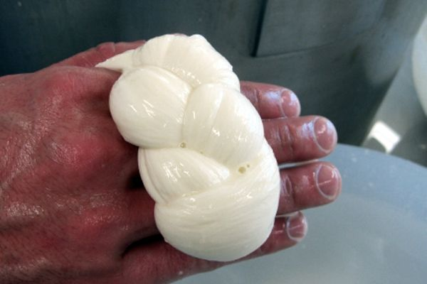 Mozzarella Treccia. Our Gold Award winning Treccia mozzarella is created through a process of spinning, cutting and twisting. The result is a wonderful shape with unique subtle differences in texture and consistency with normal Fiordilatte.