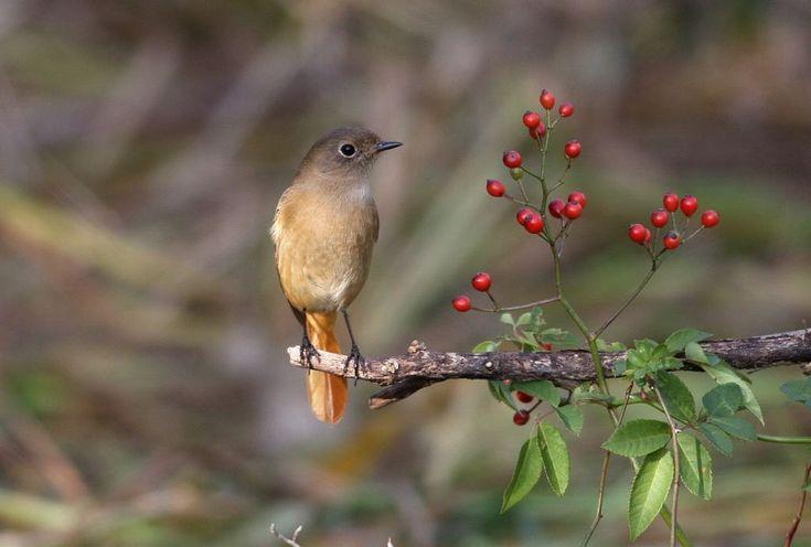T/Hの野鳥写真-Ⅰの画像