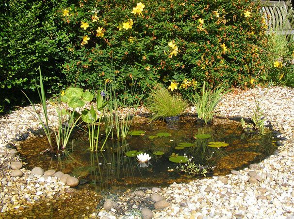 The 89 best ideas about create your own pond style on for Koi pond depth