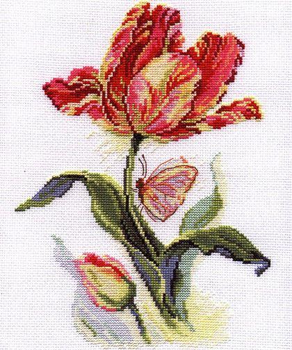 parrot tulip w/butterfly