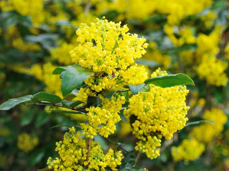 Discover the winter-blooming perennials and shrubs that will brighten your yard on HGTV.com.