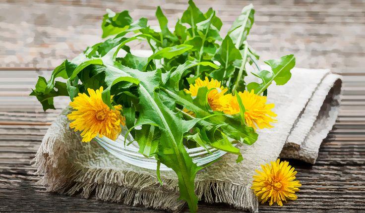 Pampeliška – využijte léčivé vlastnosti jarní bylinky – 2. část