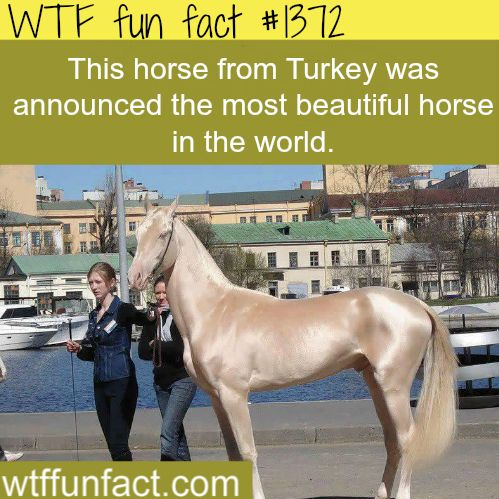 most beautiful horse in the world animals facts / wtf fun facts