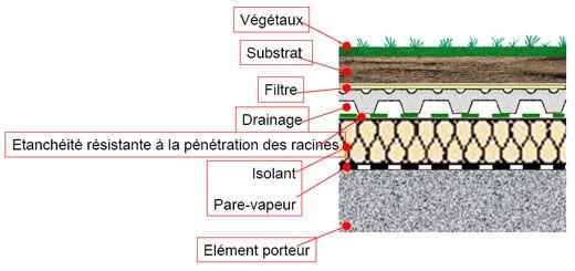 toit végétalisé | Coupe d'une toiture végétalisée