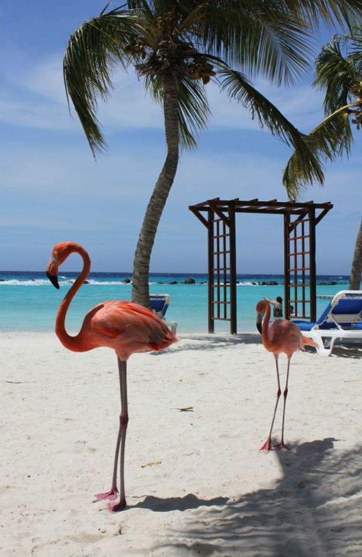 Renaissance Aruba Resort & Casino, Oranjestad, Aruba - Flamingos at Renaissance Aruba private island.