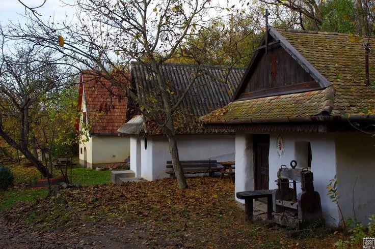 Apródok útja tanösvény (Drégelypalánk): Szőlőhegyi pincesor