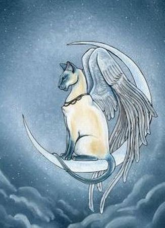 Thank you, Angel Cat, for your quiet guidance that takes us straight into the world of the Divine!