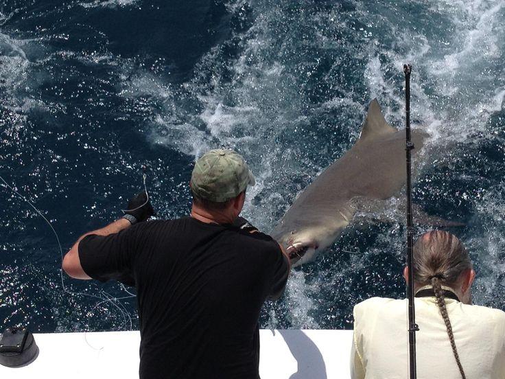 58 Best Shark Fishing Images On Pinterest Sharks Great