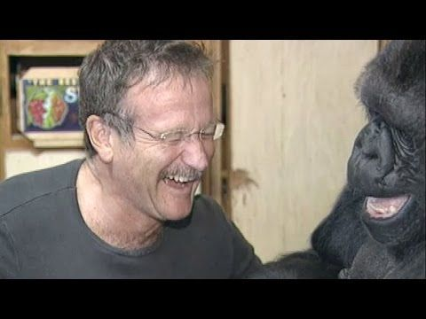 These Photos Of Koko The Gorilla Mourning The Loss Of Robin Williams Are Incredibly Moving