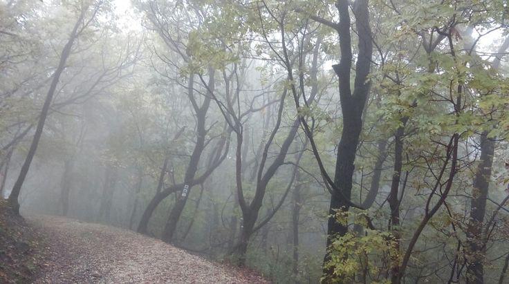 Foggy trip through the forest