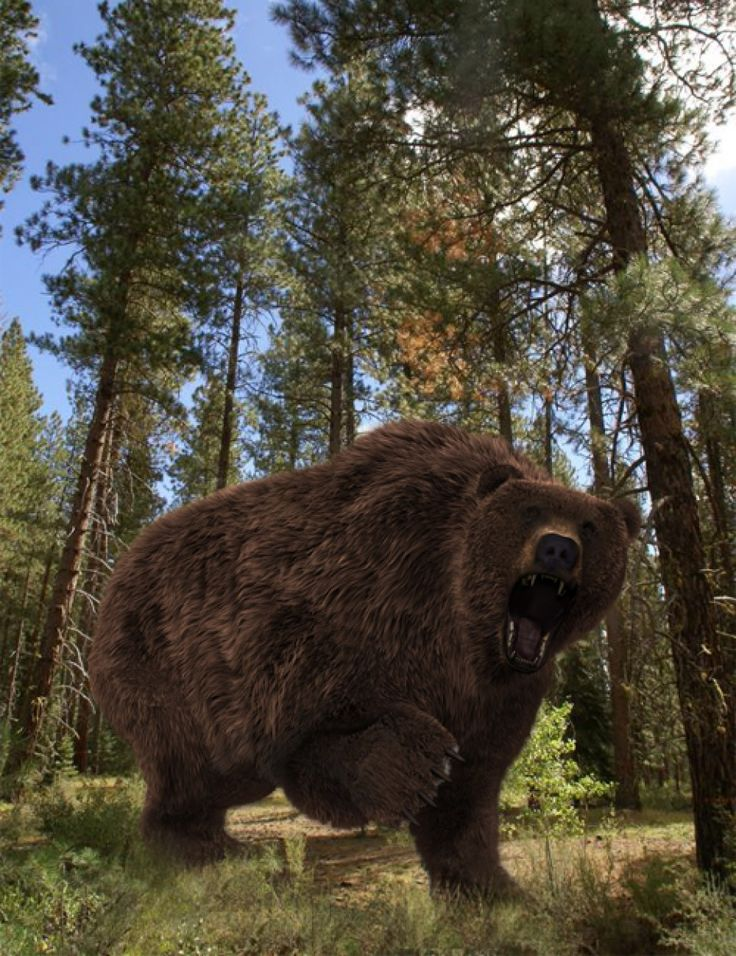 Ursus arctos daz3d animals pinterest brown bear voltagebd Images