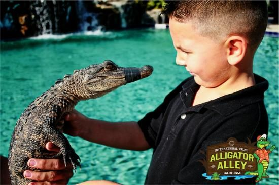 Alligator Alley, Orlando: See 12 reviews, articles, and 14 photos of Alligator Alley, ranked No.263 on TripAdvisor among 421 attractions in Orlando.