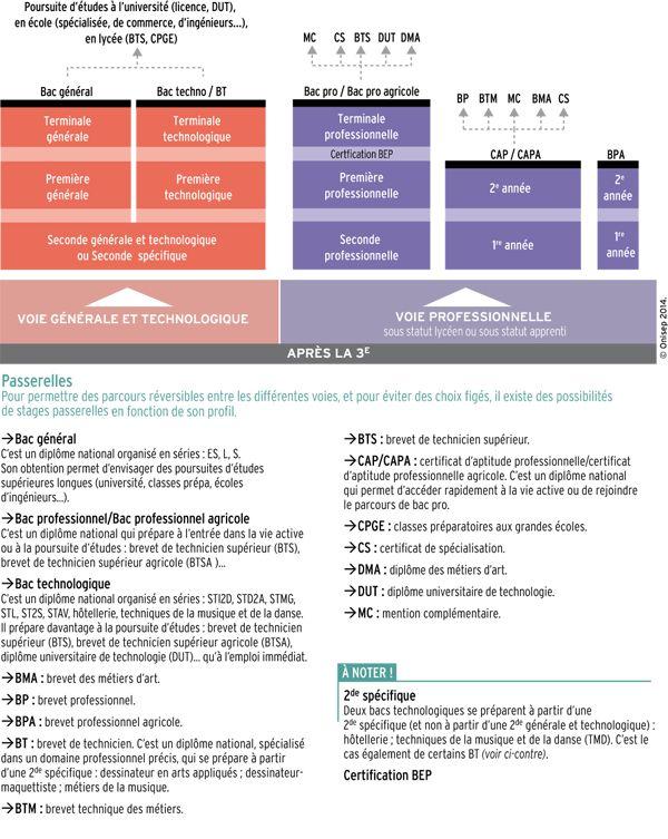 Schéma des études après la 3e (Rentrée 2013)