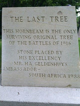 THE LAST TREE - Lutendo Ratshibaya sent in this photo of a tree, the last remaining Hornbeam from the battles of 1916, Arques la Beataille, France. Beneath it is a close-up of the plaque in front of the tree. - See more at: http://www.sapeople.com/2014/11/09/remembering-south-african-soldiers/#sthash.Pn2UTpT0.dpuf