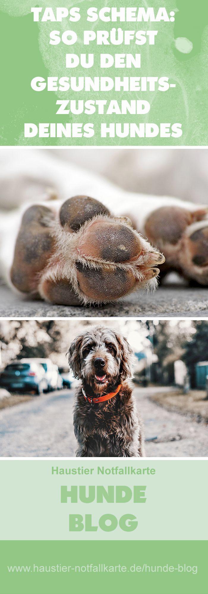 TAPS Schema: so prüfst Du den Gesundheitszustand deines Hundes! Jetzt im #Haustier #Notfallkarte #Hunde #Blog!