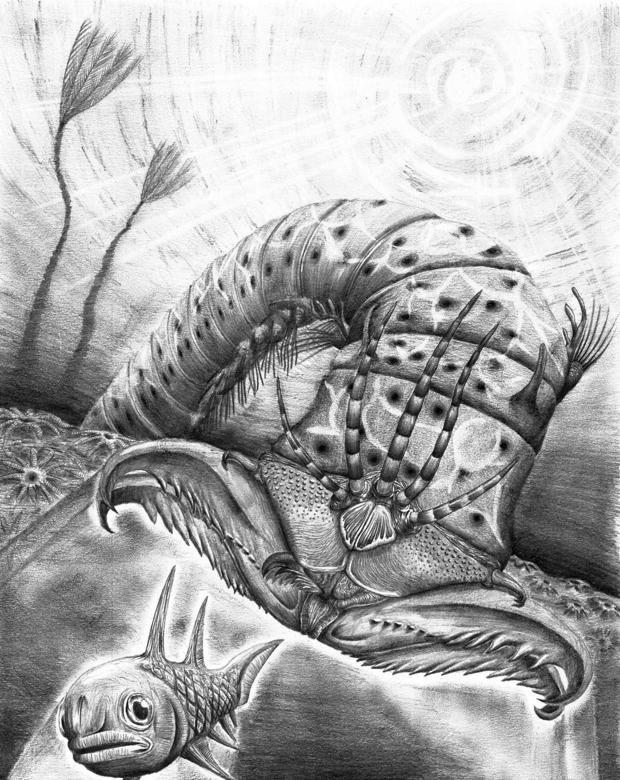Un gusano gigante «de pesadilla» de hace 400 millones de años, descubierto en un museo de Canadá Investigadores de la británica Universidad de Bristol, la sueca de Lund y el Museo Real de Ontario en Canadá han encontrado en los almacenes de ese ... http://sientemendoza.com/2017/02/22/un-gusano-gigante-de-pesadilla-de-hace-400-millones-de-anos-descubierto-en-un-museo-de-canada/