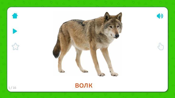 Волк - Дикие Животные - Карточки Для Детей #длядетей