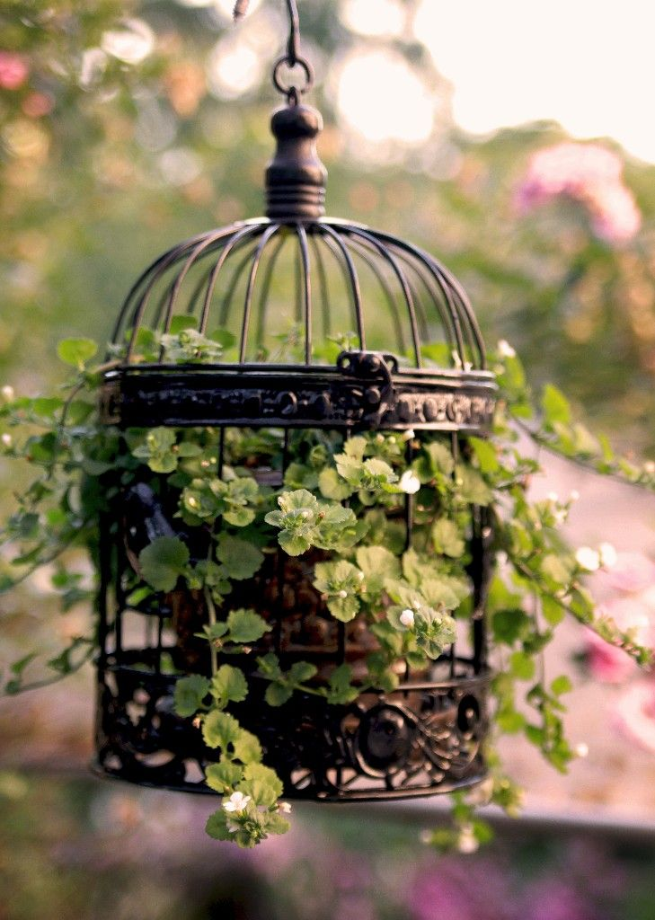 Planta dentro de gaiola de passarinho
