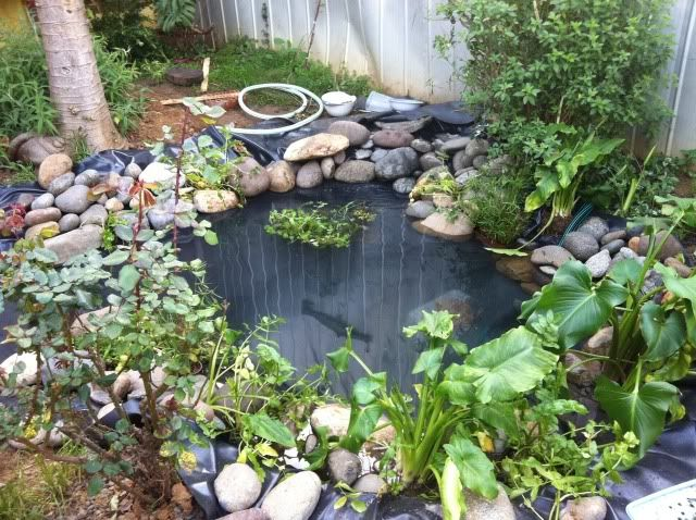 16 best tortugarios en casa images on pinterest backyard for Como oxigenar un estanque de peces