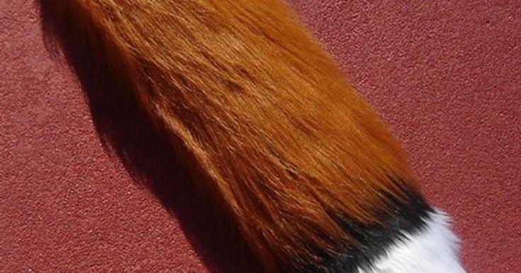 Cómo hacer un disfraz de zorro. Un disfraz de zorro es un disfraz de animal sencillo que puedes hacer para una fiesta temática o para Noche de Brujas. Los niños y los adultos pueden usarlo, y alterarlo para que combine con su estilo. Todo lo que se necesita es algo de costura y creatividad. Los zorros suelen ser de colores rojos y naranjas, así que elige qué color te funciona ...