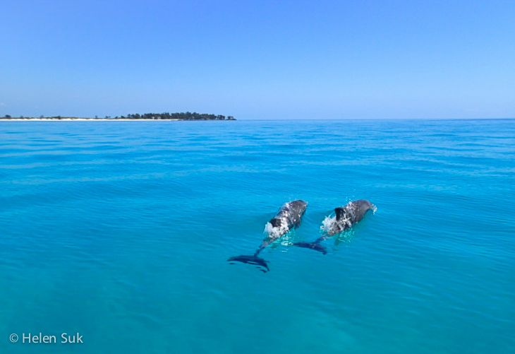 I spent an incredible day snorkelling in Mozambique with Anantara Bazaruto Island Resort & Spa. On the way back to the luxury resort, I spotted humpback dolphins in the clearest of turquoise waters.