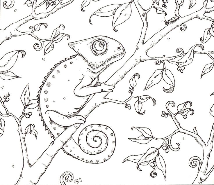 31 best Chameleon pens colouring images on Pinterest | Chameleon ...