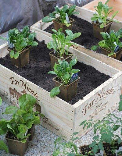 box garden for those summer veggies!
