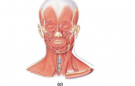 Ear Anatomy Diagram Blank